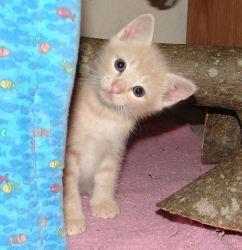 Serenity's 9 Kittens