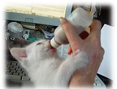 How to raise an orphaned Kitten - Kitten Bottle-feeding