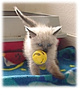 How to raise an orphaned Kitten - Basic Kitten Care
